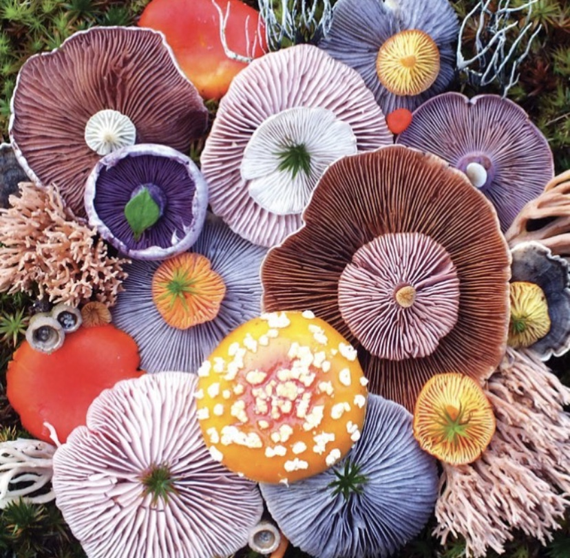 From reishi to cordyceps, mushrooms are the hottest wellness supplements on the scene